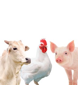Desempenho exportador das carnes nos primeiros 14 dias úteis de novembro