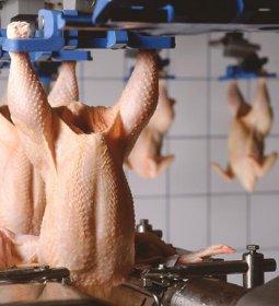 China responde por 77% do volume adicional de carne de frango exportada até agosto