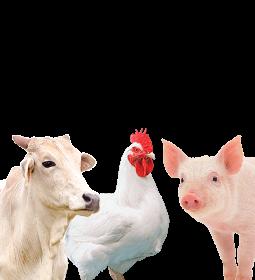 VBP animal de 2021 pode aumentar perto de 10%, estima CNA