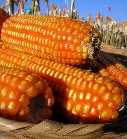ABPA - POSICIONAMENTO SETORIAL: Suspensão PIS e COFINS para Importação de Milho