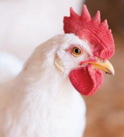 Acordo com a União Europeia: bem-estar animal em evidência