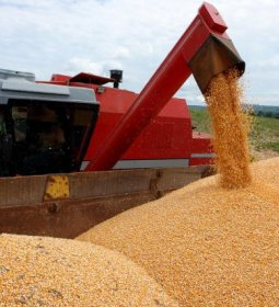 Conab estima produção recorde de 241,3 milhões de toneladas de grãos na safra 2018/2019