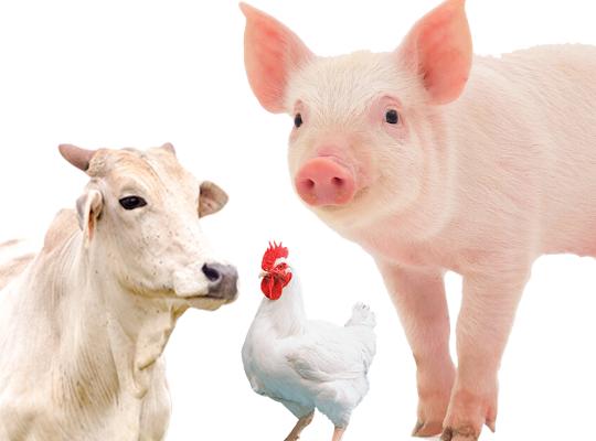 Alegra: Novas gerações despertam em indústrias alimentícias urgência de olhar para bem-estar animal