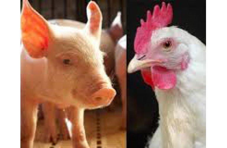 ABPA comemora novas habilitações de frigoríficos de aves e suínos pela China