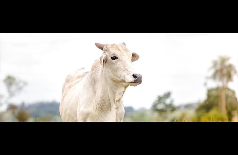 Melhora o consumo de carne bovina e valor da arroba registra alta