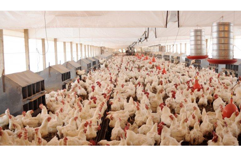 Asgav divulga dados sobre exportações avícolas no 1º Semestre