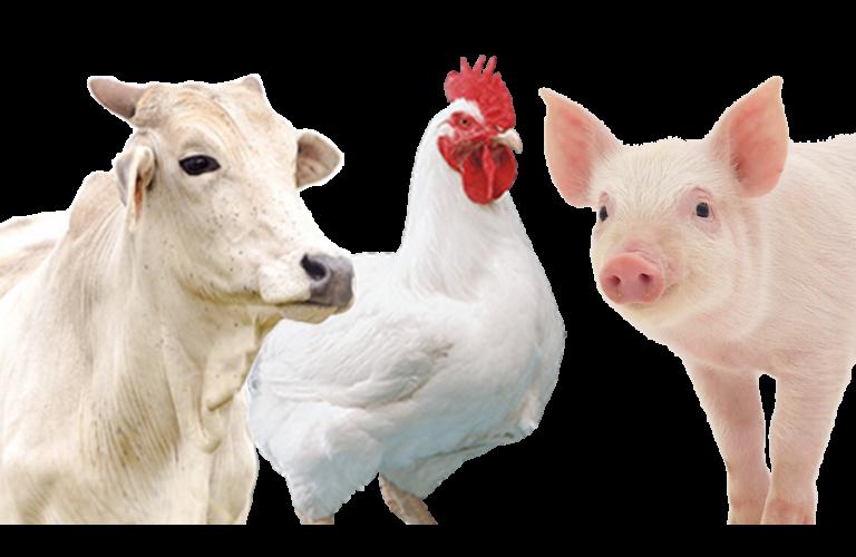 Desempenho exportador das carnes na 2ª semana de setembro e no acumulado do mês