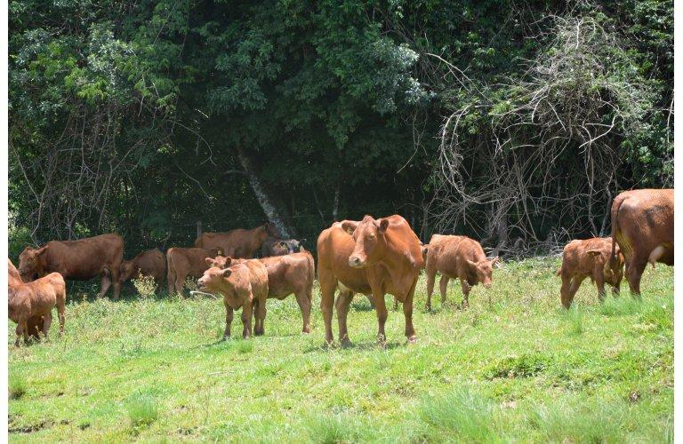 CNA apresenta sistema para rastrear e certificar produção de carne bovina